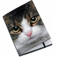 Tabby Cat A6 Notebook
